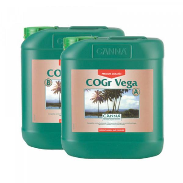Canna Cogr Vega 5L, Wachstum