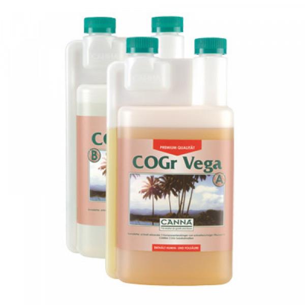 Canna Cogr Vega 1L, Wachstum