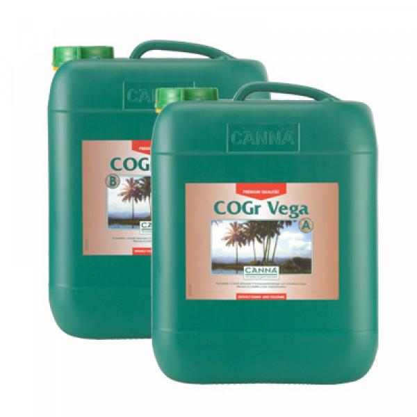 Canna Cogr Vega 10L, Wachstum